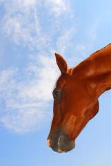 Cheval a Bromont (meunierd) Tags: blue horse canada cheval quebec farm bleu ferme bromont aninal