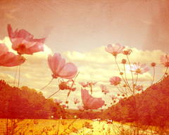 through rose colored glasses (morgan kendall) Tags: pink drive wildflowers poe