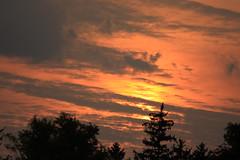 Earily Morning Delight (michaelmatusinec) Tags: sunrise frontyard digitalcameraclub wisconisn canoneos40d autumn2008