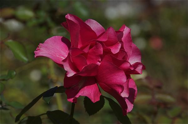 flower_0153