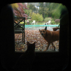the dog wants in, the cat wants out (valcox) Tags: square ttv throughtheviewfinder thelittledoglaughed