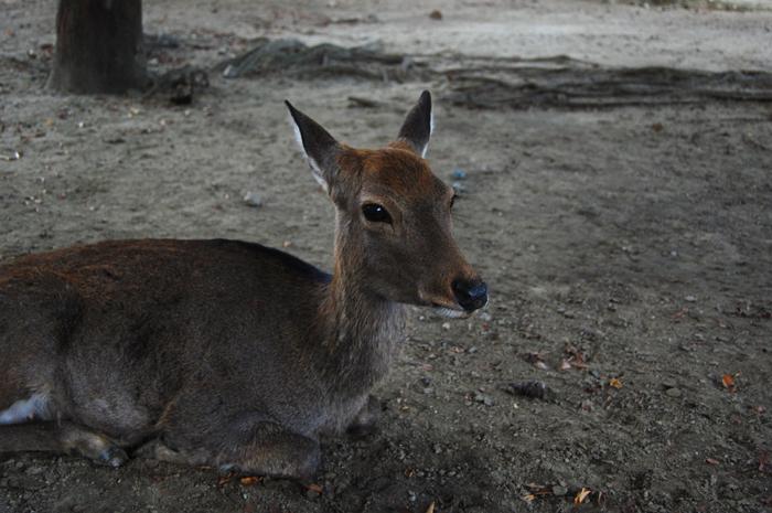 Deer Park, Japan