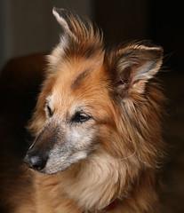 Bella (CarolAnn Photos) Tags: dog animal canon eos bella dslr 400d beginnerdigitalphotographychallengewinner beautifulworldchallenges