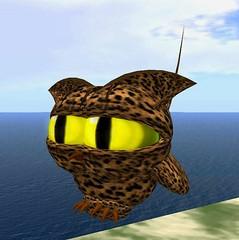 2008-11-14 Mocho leopardo_001