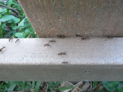 你拍攝的 99螞蟻搬家。