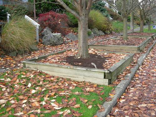 Cherry tree planter boxes