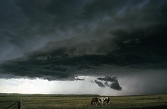 Umm, maybe it's time to take cover!! (Kevin Aker Photography) Tags: horses favorite storm nature weather clouds southdakota photography photo moving interestingness amazing cool interesting image photos awesome favorites images explore strong thunderstorm frontpage thebest rapidcity flickrfavorites mostviews favoritephotos wildweather bestphotos coolclouds favoritephotography wildnature coolimages photographyfavorites flickrsbest coolimage awesomecapture weatherphotography amazingphotos severethunderstorms thebestonflickr amazingphotography coolphotography colourartawards stormphotography awesomeimages awesomeimage southdakotathunderstorms therebeastormabrewin profesionalphotography strongphotography tornadoalleyusa kevinaker cloudslightningthunderstorms kevinakerphotography kevinakerphotgraphy everyonesfavorites coolcaptures thebestweatherphotos awesomeweatherphotos showmethebestphotos exploremyphotography simplyawesomephotography bestphotographyonflickr photoswiththemostviews strongphoto