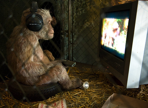 Monkey watching monkey documentary