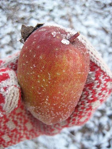 Frostnupet äpple