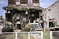 gm_10326 Bird Houses on Richards Street, Vancouver BC 1986 (CanadaGood) Tags: white house canada color colour building vancouver analog fence garden bc britishcolumbia crafts craft slidefilm streetphoto eighties 1986 richardsstreet canadagood filmbranduncertain slidecube