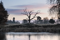 A hint of warmth (Kevin Day) Tags: sunrise dawn deadtree slough berkshire kevday langleypark