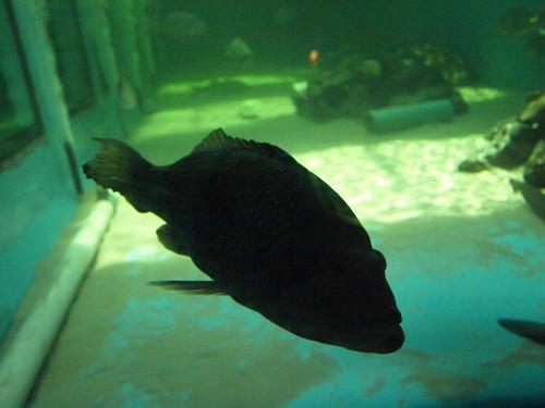 Clearwater Marine Aquarium: Ghost Fish