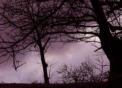Silhouettes on a Purple Sky (Sabrina Campagna) Tags: sky tree nature silhouette lumix gloomy purple natura monochromatic panasonic nostalgia cielo 50 albero viola malinconia fz controluce melancholic fz50 flickraward