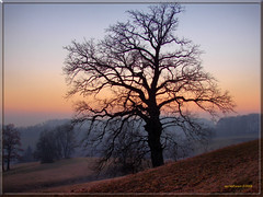 A tree in sunset light (MyOakForest) Tags: winter sunset mist tree abend baum dunst abendlicht mywinners diamondclassphotographer goldstaraward