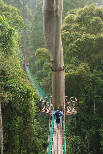 BRL Canopy Walkway