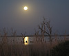 Moonlight (hondo222_222) Tags: utata:project=nocturnal2