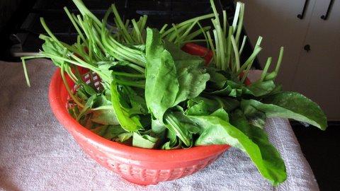 spinach 300408
