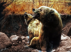 grizzly bear (Kris Kros) Tags: california bear ca usa history museum photoshop mammal photography la losangeles los high nikon dynamic angeles north socal national american kris d200 grizzly 2008 range hdr kkg cs3 blueribbonwinner 3xp photomatix kros kriskros kk2k betterthangood allkindsofbeauty vision100 kkgallery