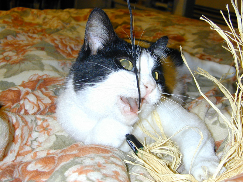 Nummy string