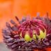 St James's Park's flower
