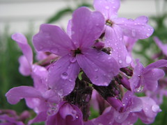 Purple (after the) Rain