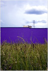 layered (paulhitz) Tags: blue color green purple michigan detroit eastside layered paulhitz