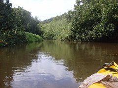 Hanalei River Photo