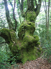 "Moss • <a style=""font-size:0.8em;"" href=""http://www.flickr.com/photos/48277923@N00/2620422315/"" target=""_blank"">View on Flickr</a>"