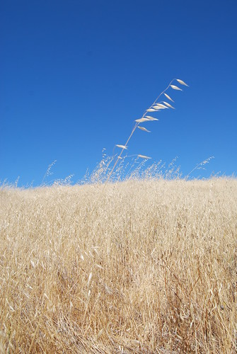 Skyline grasses