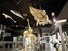 Tokyo 2008 - 國立科學博物館 - 第一階(1)