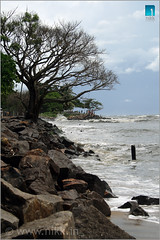 Vanishing... (:: niKk clicKs ::) Tags: trees india beach nature canon landscape kiss waves kerala seawall explore vanishing cochin kochi ernakulam southindia arabiansea nikk fortkochi fortcochin godsowncountry explored canoneoskissdigitalx queenofarabiansea picnikk