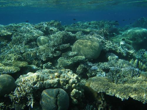 Arrecife de coral, Aqaba (Jordania)