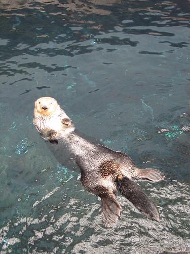 看我悠閒地游泳