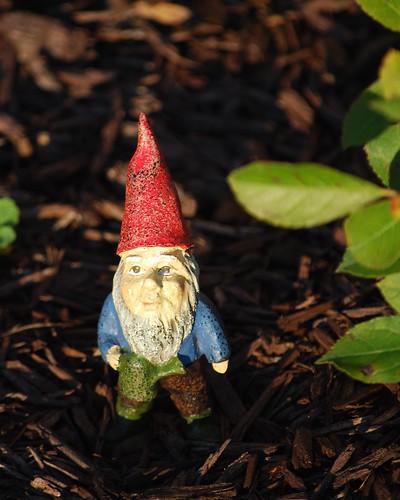 tiny gnome DSC_1501