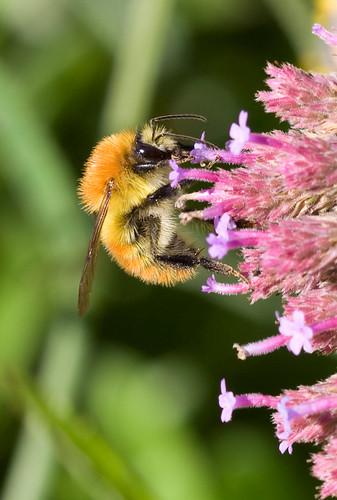 Funky Little Bee