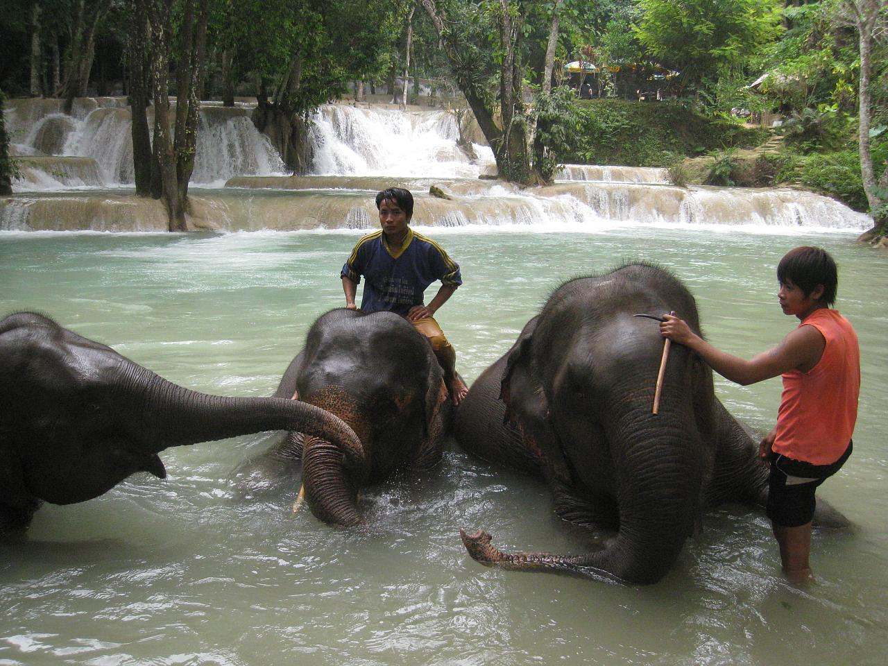 Elephants are bathed at the waterfalls