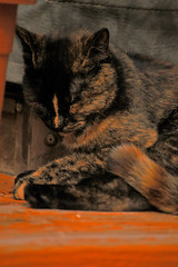 Can't hold back the Z's (36 Frames Photography) Tags: seattle classic film digital port cat canon mediumformat washington nikon feline media d70 daniel pussy orchard zen wa hager tacoma nikkor largeformat portorchard silverdale danielhager zenmedia hagerphotography