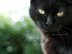 Furry bokeh! (~ielle~ ilarialuciani.com) Tags: pet look animal cat catwomen eyes bokeh iaia occhi sguardo canon50mmf18 ila mybest gatto gatta ilarialuciani catmoments 365bokeh miciamay