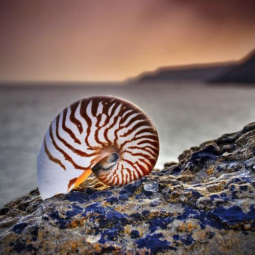 Shells photography