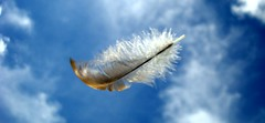 The Feather & the Wind!! (Jess Gutirrez Gmez) Tags: sky motion macro clouds movement colombia wind action air jesus feather viento move movimiento cielo nubes gutierrez pluma aire medellin gomez mover defocused desenfocada accion desenfocado cruzadas sonydscw90 goldcruzadas