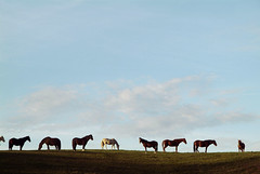 Last of the days rays... (maggiedeephotographer) Tags: horses horse chevaux flickrlovers