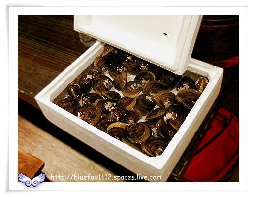 081112大隱酒食06_吧台上新鮮的馬蹄蛤