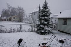 John Boy Put the Lawn mower away ITS SNOWING (Cindy's World) Tags: snow canada nb moncton nov19th lawnmover cindysworld fristsnowfall