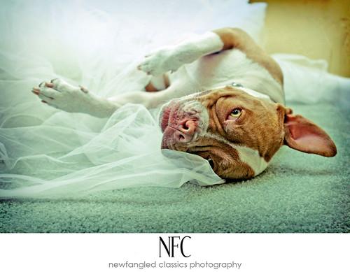 piglet's bridal session 4