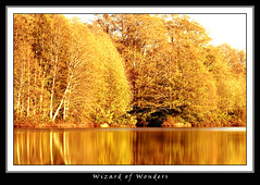 Lake of Gold (Wizard of Wonders) Tags: trees lake tree gold nikond200 vancouverbccanada sigma150500mmf563dgoshsm wizardofwondersallrightsreservedcopyright2008 graphicmaster