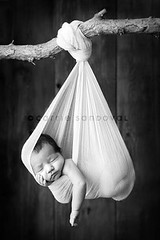She showed me {4 weeks} (carrie sandoval) Tags: baby branch sling newborn
