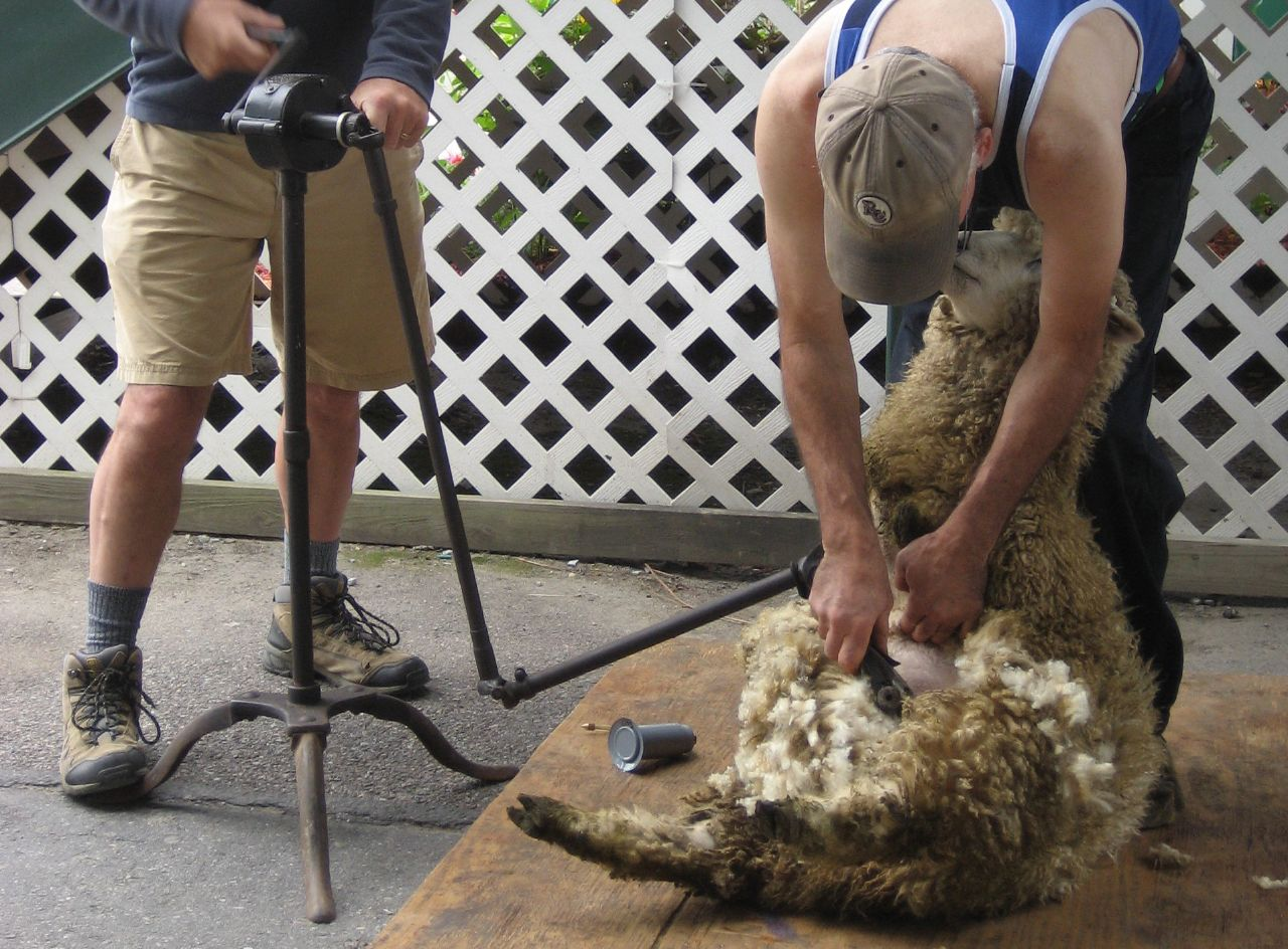 VT Sheep & Wool Shearing demo