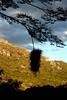 Brincar de viver (Fabiana Velôso) Tags: minasgerais luz contraluz ninho sombra céu estrada montanha pedras diamantina ávore biribiri duetos frenteafrente fabianavelôso brincadeviver