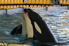 keto et kohana v1 101008 (valentin666) Tags: parque killer whale orca shamu loro orque