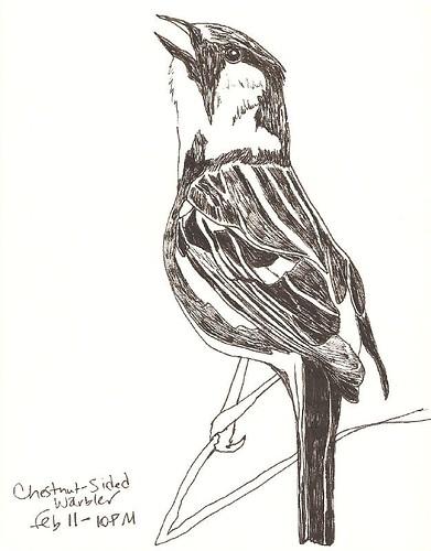 2009-FEB-birdsketch-csw